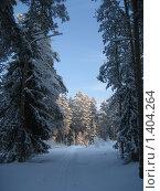 Купить «Зимний лес», фото № 1404264, снято 3 января 2010 г. (c) Юлия Козинец / Фотобанк Лори