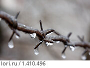 Купить «Колючая проволока с замерзшими каплями на колючках», фото № 1410496, снято 24 января 2010 г. (c) Елена Олешко / Фотобанк Лори