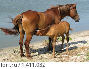 Купить «Лошадь с жеребенком около воды», фото № 1411032, снято 20 марта 2019 г. (c) Ольга Вьюшкова / Фотобанк Лори