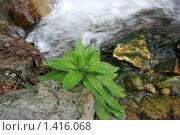 Цветок на фоне водопада. Стоковое фото, фотограф Natalisha / Фотобанк Лори