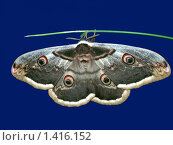 Бабочка. Стоковое фото, фотограф Наталья Василенко / Фотобанк Лори