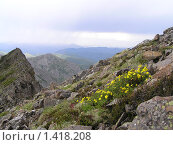 Цветы в горах. Стоковое фото, фотограф Павел Махоткин / Фотобанк Лори