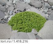 Мох. Стоковое фото, фотограф Павел Махоткин / Фотобанк Лори