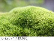 Карпатский мох. Стоковое фото, фотограф Кайсина Юлия / Фотобанк Лори