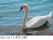 Купить «Белый лебедь», фото № 1419148, снято 24 августа 2009 г. (c) Литова Наталья / Фотобанк Лори