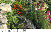 Купить «Сад», фото № 1431496, снято 21 августа 2009 г. (c) Арапова Ольга / Фотобанк Лори