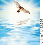 Купить «Ястреб над морем», фото № 1433556, снято 26 июня 2019 г. (c) Andrejs Pidjass / Фотобанк Лори