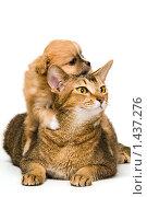Купить «Кошка и щенок», фото № 1437276, снято 23 января 2010 г. (c) Vladimir Suponev / Фотобанк Лори