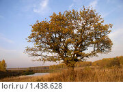 Пейзаж с дубом. Стоковое фото, фотограф Виктор Вуколов / Фотобанк Лори