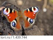 Бабочка. Стоковое фото, фотограф Лизунова Анастасия / Фотобанк Лори