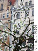Цветы на фоне пражских домов. Стоковое фото, фотограф Бельская (Ненько) Анастасия / Фотобанк Лори