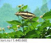 Бабочка на цветке. Стоковое фото, фотограф Юлия Кузнецова / Фотобанк Лори