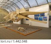 Купить «Калининград. Скелет кашалота в Музее Мирового океана», фото № 1442048, снято 27 января 2010 г. (c) Ирина Борсученко / Фотобанк Лори