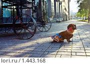 Собака возле телеги. Стоковое фото, фотограф Сунгатулина Эльвира / Фотобанк Лори