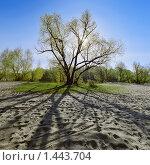 Купить «Пейзаж с деревом в контровом свете», фото № 1443704, снято 24 января 2020 г. (c) Михаил Марковский / Фотобанк Лори
