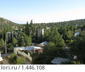 Крым, пос. Новый Свет. Реликтовый можжевеловый лес (2008 год). Стоковое фото, фотограф Андрей Спирин / Фотобанк Лори