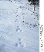 Купить «Заячьи следы», фото № 1448268, снято 1 марта 2009 г. (c) Елисеева Екатерина / Фотобанк Лори