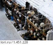 Купить «Вернисаж. Измайловский Кремль. Москва», эксклюзивное фото № 1451228, снято 30 января 2010 г. (c) lana1501 / Фотобанк Лори