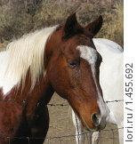Купить «Голова грустной лошади за проволочной оградой», фото № 1455692, снято 17 ноября 2007 г. (c) Валентина Троль / Фотобанк Лори