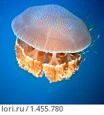 Купить «Медуза», фото № 1455780, снято 23 декабря 2009 г. (c) Ольга Хорошунова / Фотобанк Лори