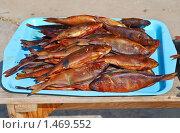 Купить «Копченая рыба», эксклюзивное фото № 1469552, снято 8 апреля 2009 г. (c) Алёшина Оксана / Фотобанк Лори