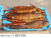 Купить «Копченая рыба», эксклюзивное фото № 1469556, снято 8 апреля 2009 г. (c) Алёшина Оксана / Фотобанк Лори