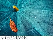 Купить «Осенний лист на сыром зонте», фото № 1473444, снято 14 ноября 2019 г. (c) М / Фотобанк Лори