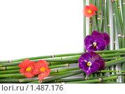 Рамочка с цветами. Стоковое фото, фотограф Елена Блохина / Фотобанк Лори