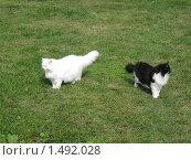 Две кошки на зеленой траве смотрят в разные стороны. Стоковое фото, фотограф Марина Проскурина / Фотобанк Лори