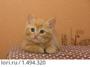 Умный кошачий взгляд. Стоковое фото, фотограф Марина Проскурина / Фотобанк Лори