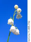 Купить «Цветы ландыша на фоне голубого неба», фото № 1495732, снято 5 мая 2009 г. (c) Юрий Брыкайло / Фотобанк Лори