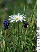 Полевые цветы. Стоковое фото, фотограф EtoileDeChemin / Фотобанк Лори