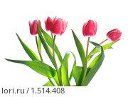 Купить «Букет тюльпанов на белом фоне», фото № 1514408, снято 17 февраля 2010 г. (c) Юрий Брыкайло / Фотобанк Лори