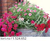 Цветы на улице города. Стоковое фото, фотограф Ирина Никитина / Фотобанк Лори