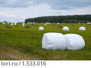 Купить «Упакованное в плёнку сено», фото № 1533016, снято 9 августа 2009 г. (c) Юрий Синицын / Фотобанк Лори