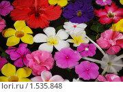 Купить «Экзотические цветы в воде», фото № 1535848, снято 9 января 2010 г. (c) Лифанцева Елена / Фотобанк Лори
