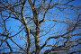 Ветви дуба на фоне голубого неба, фото № 1536700, снято 8 марта 2010 г. (c) Валерий Торопов / Фотобанк Лори