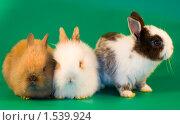 Купить «Кролики на зеленом фоне», фото № 1539924, снято 20 мая 2008 г. (c) Елена Блохина / Фотобанк Лори