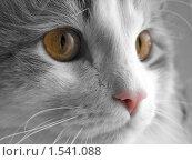 Купить «Кот с желтыми глазами», фото № 1541088, снято 15 ноября 2008 г. (c) Вячеслав Петров / Фотобанк Лори