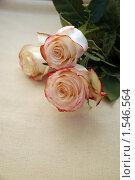 Купить «Розы и 8 марта», фото № 1546564, снято 8 марта 2010 г. (c) Ольга Долотина / Фотобанк Лори