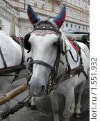 Купить «Голова лошади», фото № 1551932, снято 14 сентября 2009 г. (c) Анна Белова / Фотобанк Лори