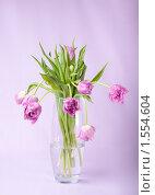 Купить «Букет сиреневых тюльпанов», фото № 1554604, снято 12 марта 2010 г. (c) Сергей Чистяков / Фотобанк Лори
