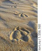 Следы на песке. Стоковое фото, фотограф EtoileDeChemin / Фотобанк Лори