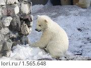 Купить «Медвежонок», фото № 1565648, снято 11 марта 2010 г. (c) Яременко Екатерина / Фотобанк Лори