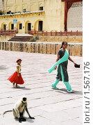 Купить «Индийская картинка», эксклюзивное фото № 1567176, снято 10 апреля 2020 г. (c) Free Wind / Фотобанк Лори