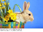 Купить «Пасхальный кролик и тюльпаны», фото № 1567612, снято 15 апреля 2009 г. (c) Александр Паррус / Фотобанк Лори