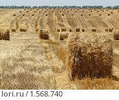 Купить «Заготовка соломы для животноводства», фото № 1568740, снято 12 июля 2009 г. (c) Бондарь Александр Николаевич / Фотобанк Лори