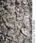 Купить «Кора сибирской березы (фон)», фото № 1569484, снято 26 января 2010 г. (c) Марина Трушникова / Фотобанк Лори