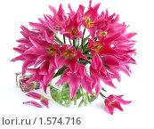 Купить «Большой букет розовых тюльпанов в стеклянной вазе», фото № 1574716, снято 26 мая 2009 г. (c) Елена Завитаева / Фотобанк Лори
