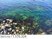Купить «Берег моря», фото № 1576324, снято 23 августа 2009 г. (c) Галина Бурцева / Фотобанк Лори